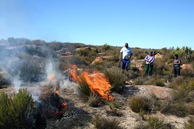 Burning-the-trial-plots-on-Blomfontein